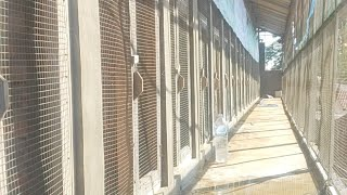 Penangkaran Murai Mbrk Rembang Jateng