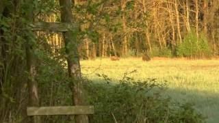 Polowanie na dziki