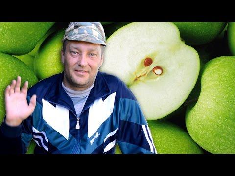 Яблоня из косточки - Как вырастить яблоню из косточки - стратификация семян
