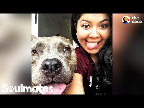 This Pittie Makes His Mom's World Go Round | The Dodo Soulmates