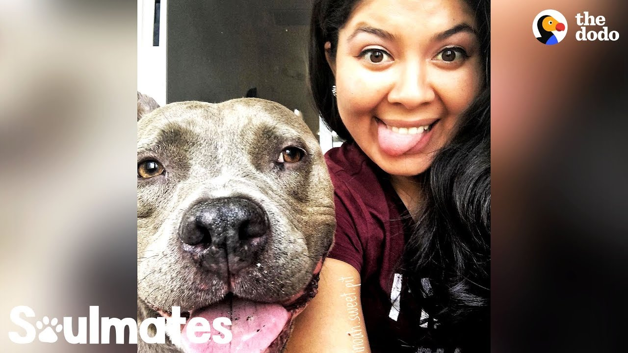 This Pittie Makes His Mom's World Go Round   The Dodo Soulmates