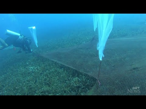 Divers remove fishing nets tangled in protected coral reef