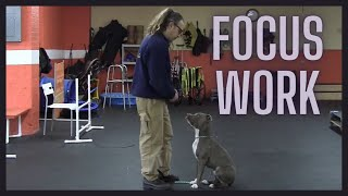 Focus Work How To Dog Training Food Training Solid K9 Training