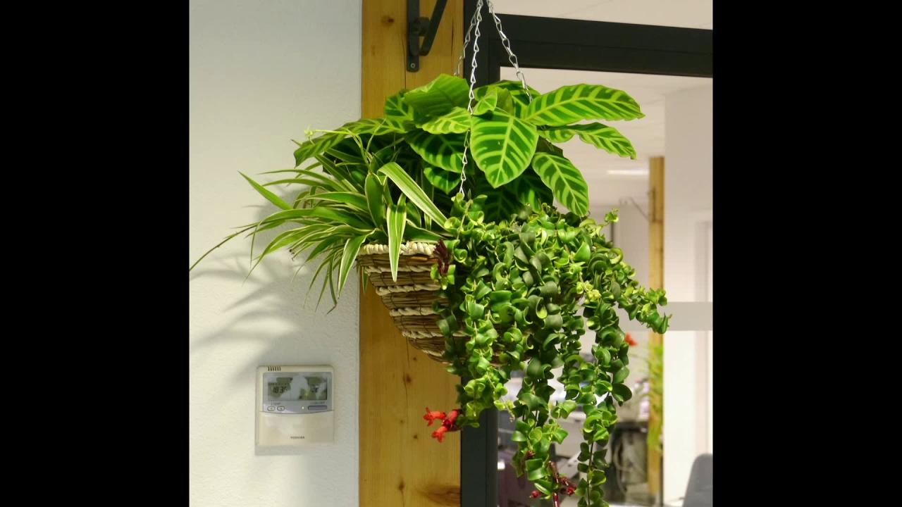 Jardini re d 39 int rieur 39 indoor jungle 39 youtube for Jardiniere interieur