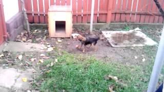 Собака бегает за хвостом :)