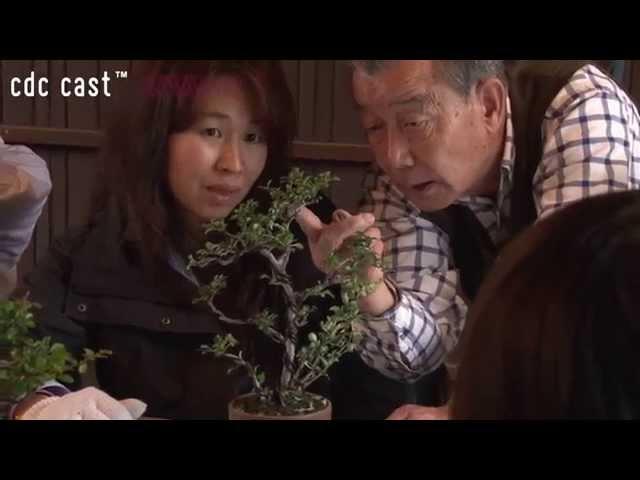 workshop – 植物との対話 〜盆栽をはじめてみませんか?〜