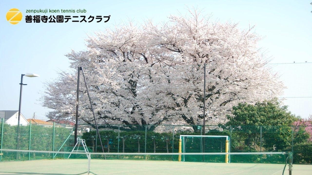 クラブ テニス 善福寺 公園 善福寺公園テニスクラブ 東京都練馬区/テニスコート