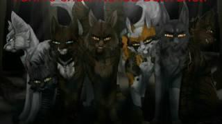 Топ:10 злых Котов Воителей.
