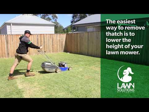 How To Remove Thatch From Your Lawn | Dethatching