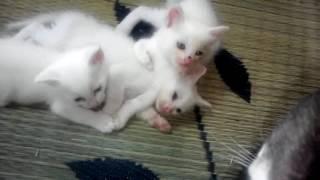 飼い猫ミルクが子猫を産んだよ ミルクのLINEスタンプ作りました □作者UR...
