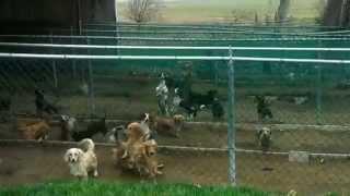 Crazy Dachshund Farm.