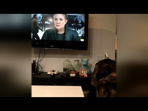 Carrie Fisher's French Bulldog Looks Sadly at TV During New 'Star Wars' Trailer