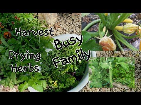 Harvest, Herbs, drying//freezer corn//country kids!