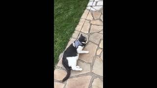 Broken funny cat