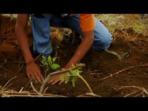 ZambaZamba Madagascar 2015 - eco agriculture