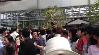 神戸どうぶつ王国の年パス情報はこちら http://nishikiorikai.net/wp/ko...