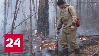 Ситуация с лесными пожарами в России постепенно улучшается - Россия 24