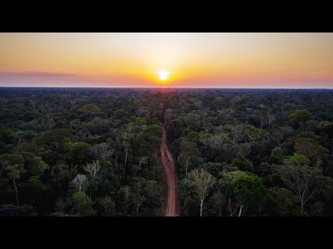 Project Rondônia: On the Ground in the Brazilian Amazon