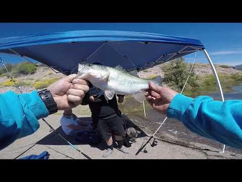 Bank Fishing At Roosevelt Lake AZ!