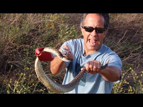 Catching Wild Rattlesnakes!