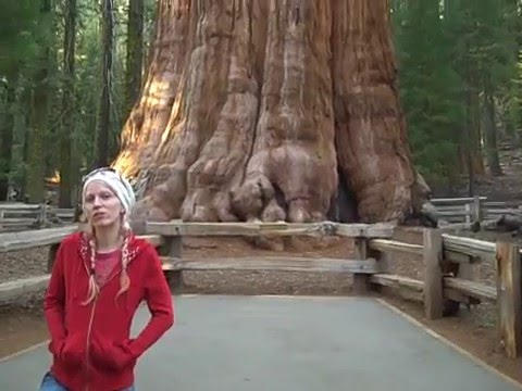 General Sherman tree in Sequoia National Forest