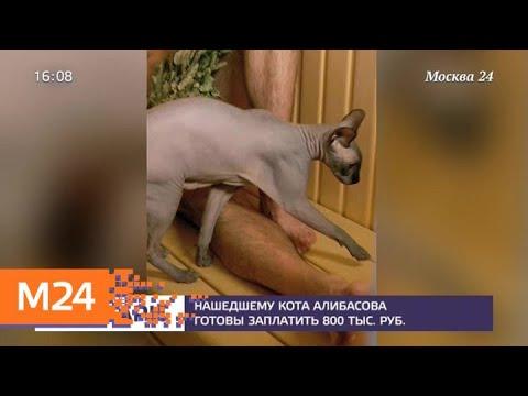 За пропавшего кота Бари Алибасова объявлено вознаграждение - Москва 24
