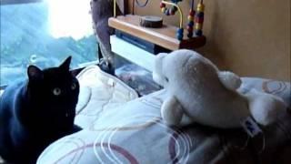 イルカのぬいぐるみ「ピッチー」を見つけて遊んでいる黒猫「味噌」です...