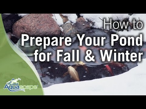 Aquascape's How To Winterize Your Pond