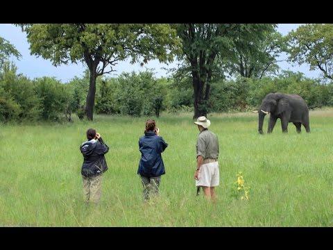 Zimbabwe Safari Webinar