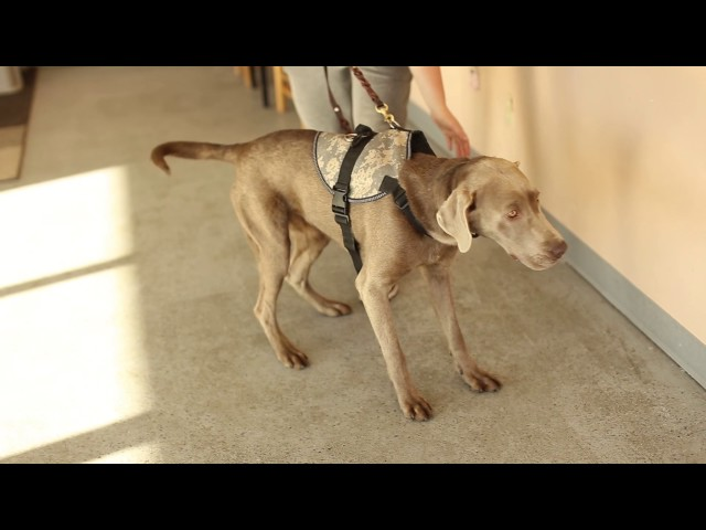 Dogs Who Serve- How to Train a Dog to Find a Lost Child