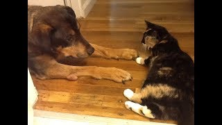 Cat Has The Most Heartbreaking Reaction After The Family Dog Passes Away From Cancer