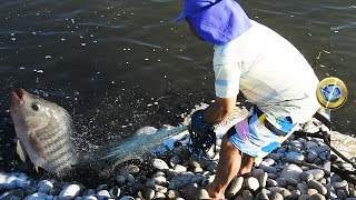 Atrapando tilapias Grandes con red - Catch of tilapia