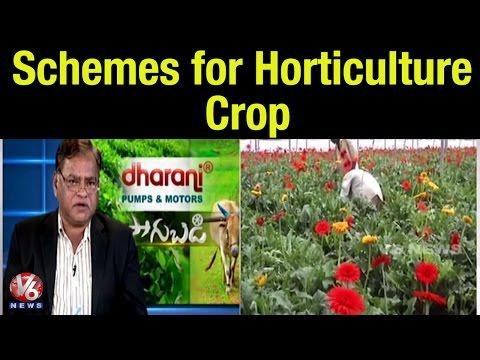 Incentive schemes for Horticulture Crop | Horticulture Commissioner Dr Venkatarami Reddy - Sagubadi