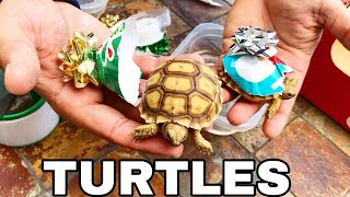 Gift WRAPPING TURTLES as PRESENTS for my Girlfriend!