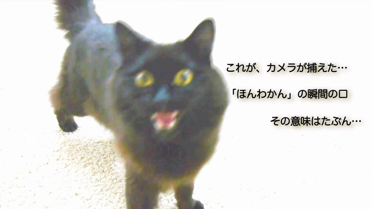 で しゃべる 猫 関西 弁