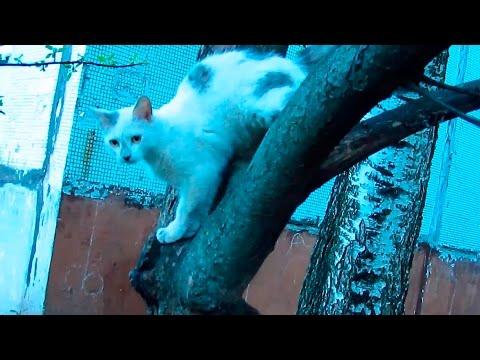 Funny cat jumping from the tree and scratching the camera