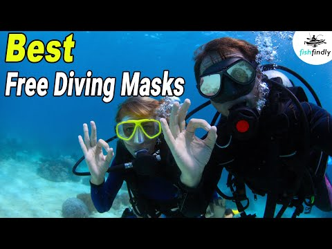Best Free Diving Masks In 2020 – Enjoy Your Free Diving!