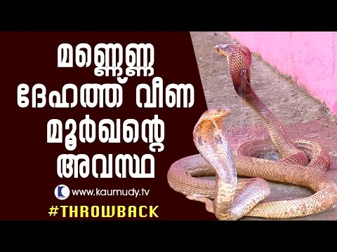 The plight of cobra, drenched in kerosene | Throwback | Snake Master