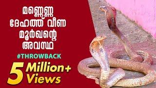 The plight of cobra, drenched in kerosene | Throwback | Snake Master