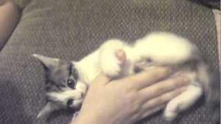 Cute kitten biting