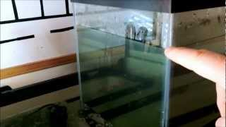 aquaponics upside down fish tank