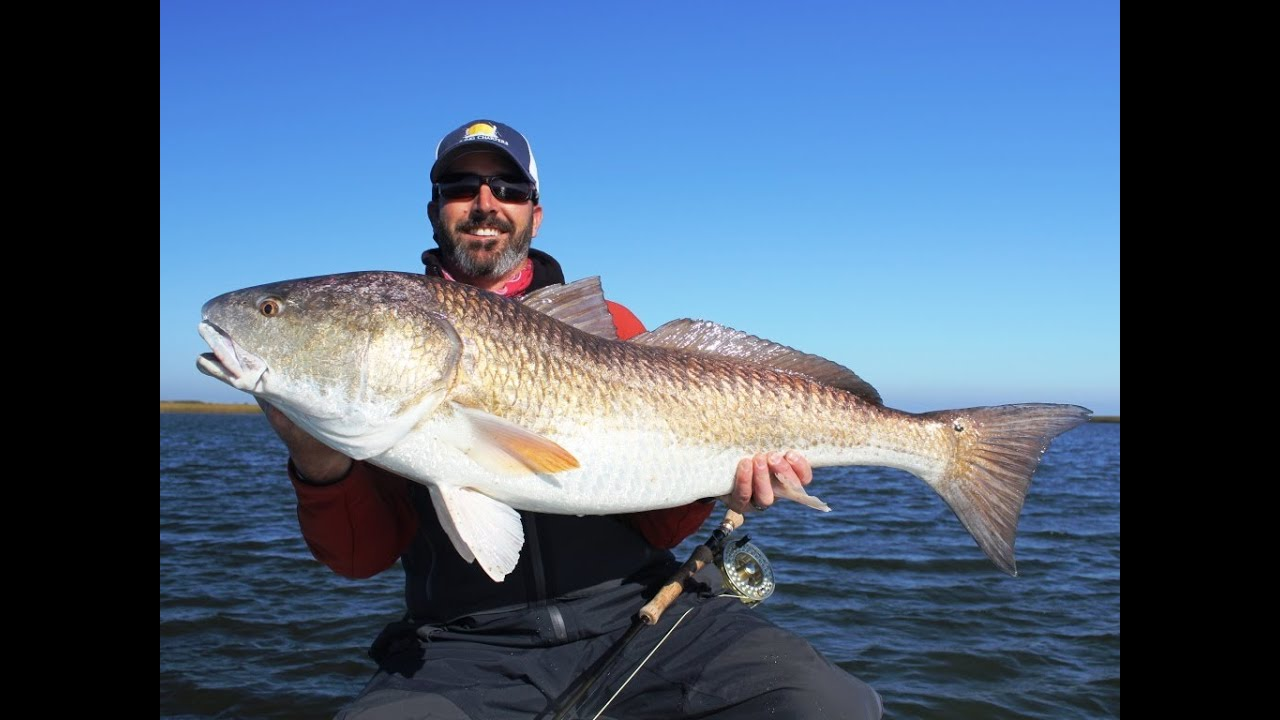 Giant redfish caught on fly youtube for How to fish for redfish