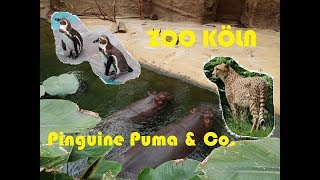 Cologne ZOO 2018 - Rundgang Zoo Köln -  Elefanten, Gorilla &Co. - Teil 1