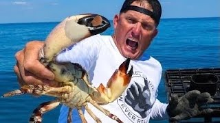 Monster Stone CRAB Destroyed my THUMB {Catch Clean Cook} best crab on Earth!