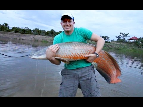 Amazon River Monster Project