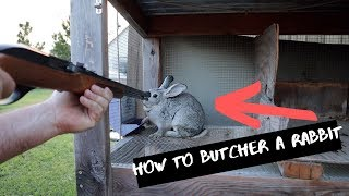 You've Never Seen A Rabbit Harvest Like This! Processing Meat Rabbits