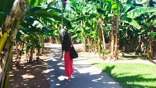 Путешествие во Флориду. Сад экзотических фруктов. Вечерний Майами. Часть 2(, 2016-08-09T03:23:14.000Z)