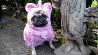 Unicorn Pug In The Garden