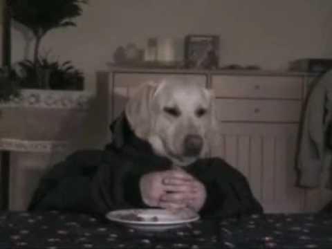 half man half dog.wmv - YouTube - photo#17