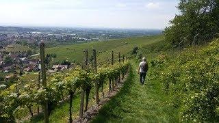 Enjoying the Wine Trail Germany